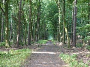 herbergenwald
